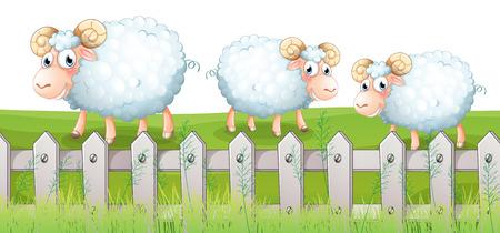 sheeps: Illustration of the three sheeps