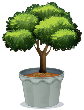 tree trimming: Illustration of a single potted plant Illustration