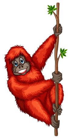 conserved: Illustration of a single orangutan