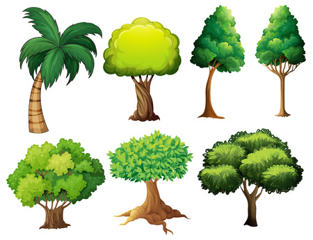 tropical evergreen forest: Illustration of a set of different trees