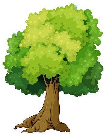Illustration of a closeup single tree Vector