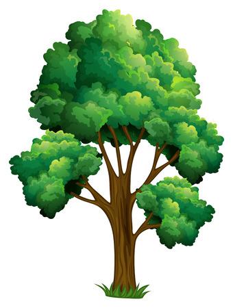 Illustration of a single tree Stock Illustratie