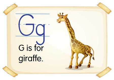 alfabeto con animales: Ilustración de una tarjeta de memoria flash con la letra G