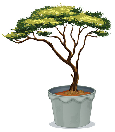 Illustratie van een plant bonsai Stock Illustratie