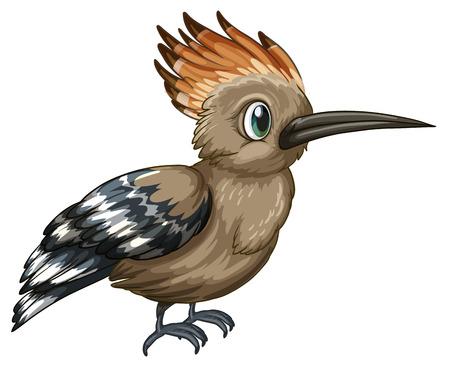 Illustration of a closeup upupa bird Illustration