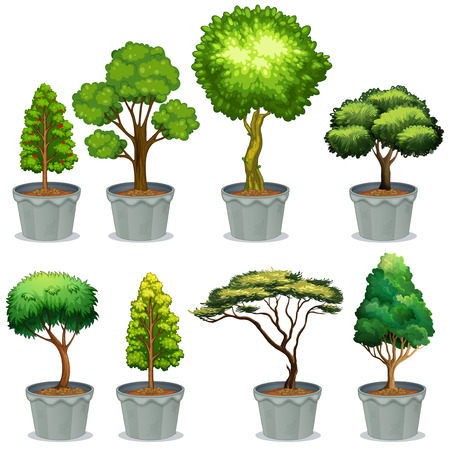 bonsai tree: Illustration of different potted plants