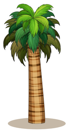 Illustration of a closeup single palm tree Vector