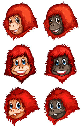 Illustration of the heads of chimpanzees on a white background
