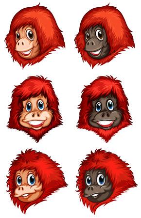 chimpances: Ilustración de los jefes de los chimpancés en un fondo blanco Vectores