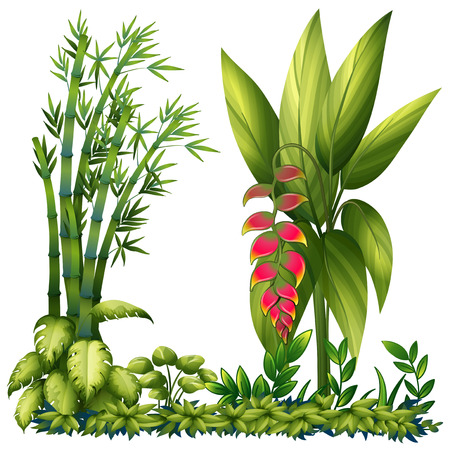 Illustration of the ornamental plants on a white background Vector