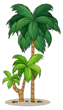 tall tree: Illustration of a palm tree on a white background