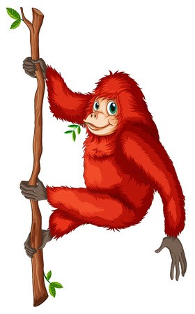 orang: Illustration of a playful red orangutan on a white background
