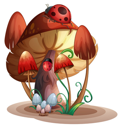 cartoon bug: Illustration of a mushroom with a ladybug on a white background