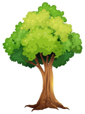 Ilustración de un árbol gigante en un fondo blanco