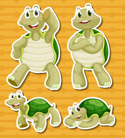 freshwater turtle: illustration of a turtle with different poses