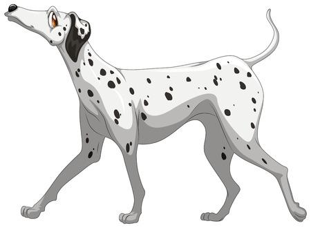 Illustration of a single dalmatian Vector