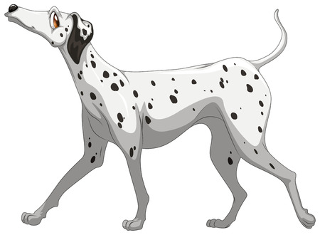 side viewing: Illustration of a single dalmatian