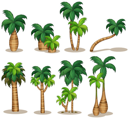 Illustraion of a set of palm tree 일러스트