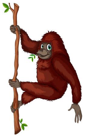 orang: Illustration of an orangutan hanging on a vine Illustration