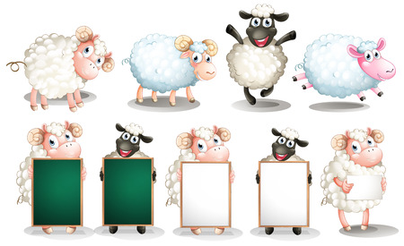 Illustration of many sheeps with different poses