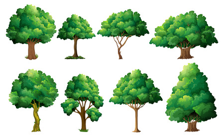 tree planting: Illustration of a set of different trees