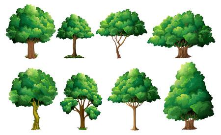 sembrando un arbol: Ilustración de un conjunto de diferentes árboles