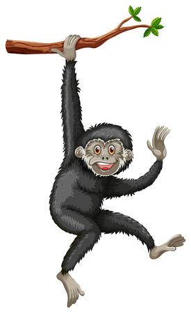 mono caricatura: Ilustración de un gibón colgando de una rama