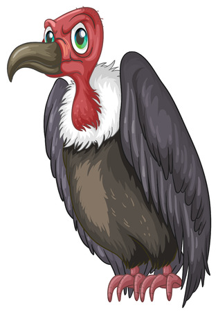bald ugly: Illustration of a closeup vulture
