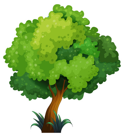 Illustration of a close-up tree Illustration