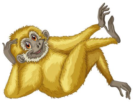 scratching: Illustration of a closeup gibbon