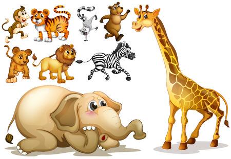 jirafa fondo blanco: Ilustraci�n de un conjunto de muchos animales Vectores