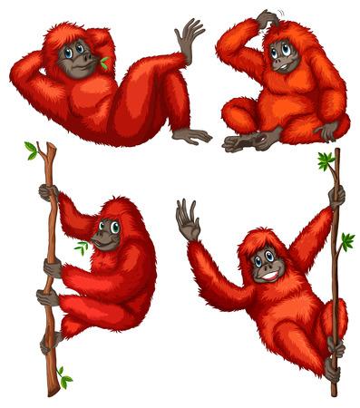 illustraion: Illustraion of a set of orangutan Illustration