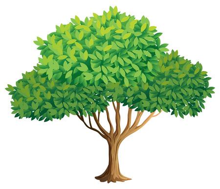 Illustration of a closeup tree Vector