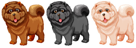 Illustration of a set of chow chow Vector