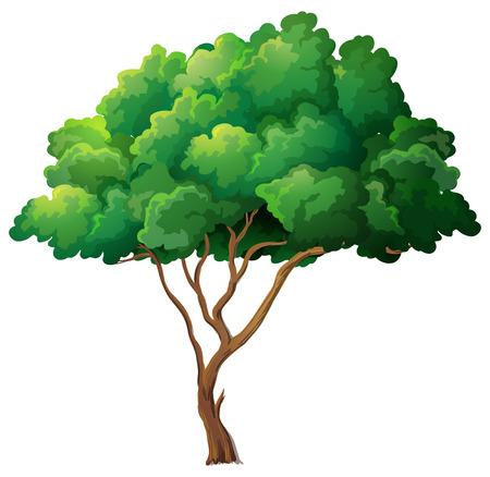 Illustration von einem einzigen Baum