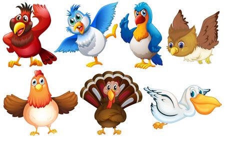 Illustration of different kind of birds Illustration