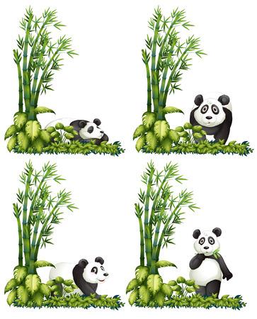 Ilustración de la panda con el bambú