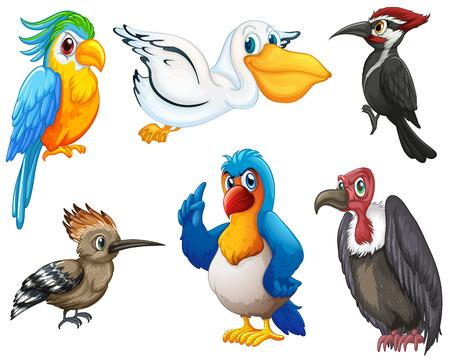 Illustration der verschiedenen Arten von Vögeln Standard-Bild - 31923295