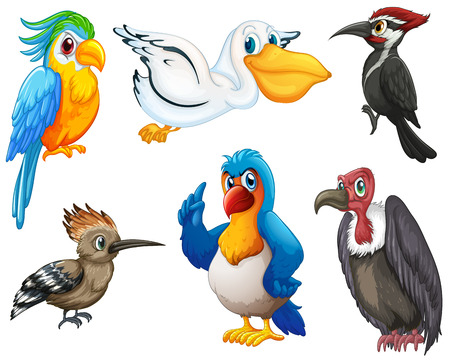 pajaro caricatura: Ilustración de diferentes tipos de aves