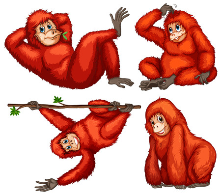 scratching: Illustration of orangutans with different poses