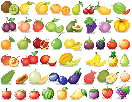 fresh fruits: Illustration of a set of fruit