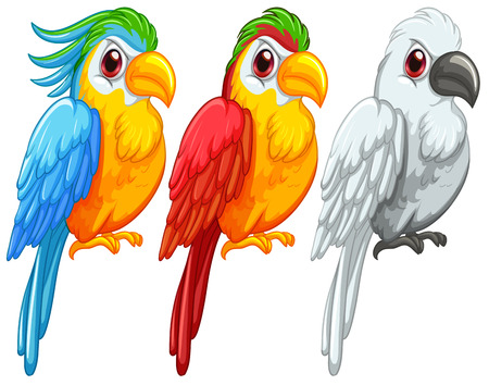 macaw parrot: illustration of a set of parrots