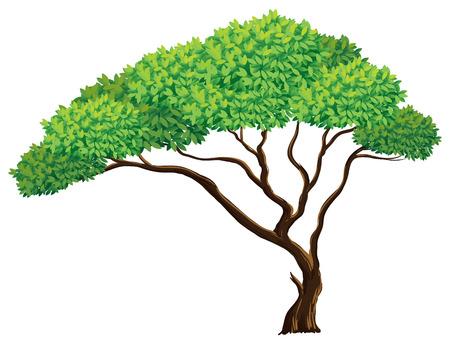 tree bark: Illustration of a close up tree Illustration