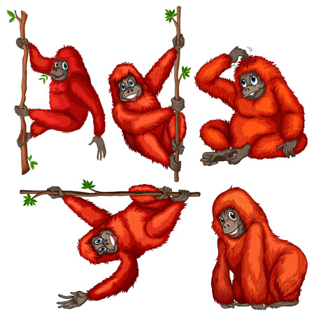 illustration of many orangutans hanging on a vine Vector