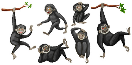 Illustration of a set of black gibbon Vector