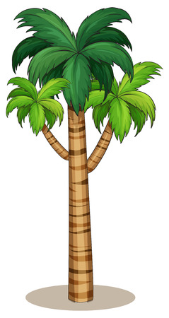 Illustration of a single palm tree
