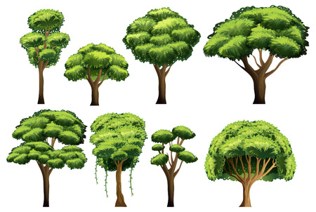 Illustration of different kind of trees Vector