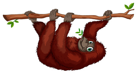 Illustration of an orangutan hanging on a vine Illustration