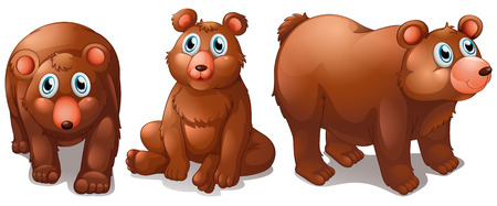 Illustration of different poses of bears Vector