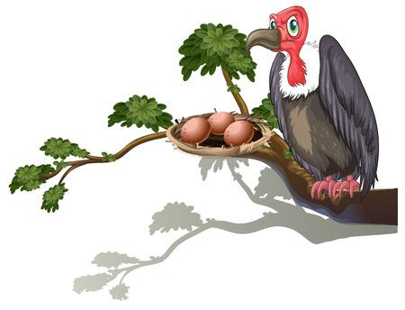 guarding: Illustration of a vulture guarding eggs Illustration